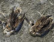 birds-dying-at-sambhar-lake_1573486591.jpeg
