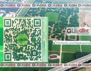 q r code trees