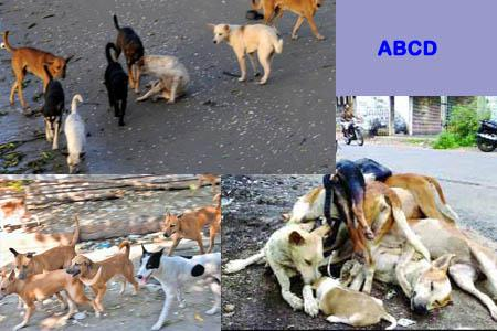 Stray dogs, ABCD