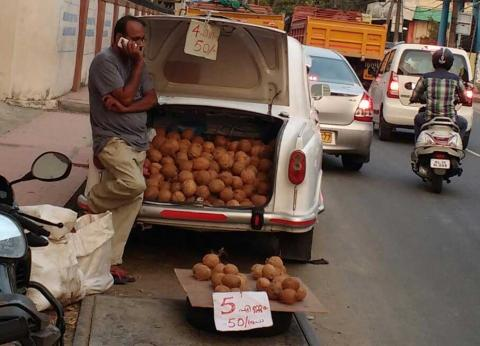 coconut selling in road