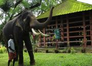 konni elephant centre