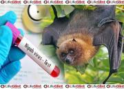 nipah virus-bat