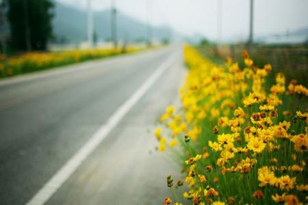 flowers in the roadside